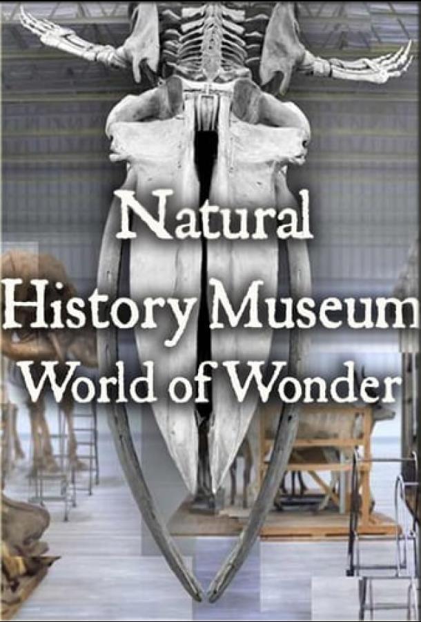 Сериал Natural History Museum: World of Wonder смотреть онлайн бесплатно все серии