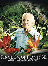 Сериал В королевстве растений смотреть онлайн бесплатно все серии
