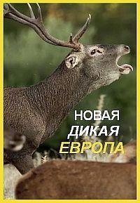 Сериал Новая дикая природа Европы смотреть онлайн бесплатно все серии