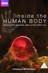 Внутри человеческого тела