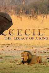 Nat Geo Wild: Сесил: Наследие короля