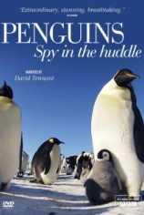 Пингвины: Шпион в толпе
