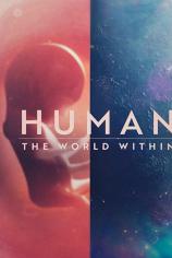 Человеческое тело: мир внутри