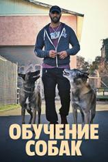 Обучение собак