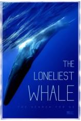 Самый одинокий кит на планете: в поисках Пятидесятидвухгерцового кита