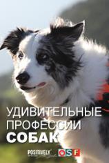 Удивительные профессии собак