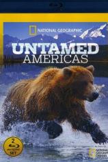 Дикая природа Америки