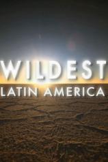 В дебрях Латинской Америки