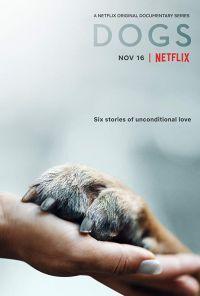 Сериал Собаки смотреть онлайн бесплатно все серии
