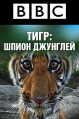 BBC: Тигр — Шпион джунглей